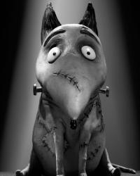frankenweenie-exclusive-character-debuts-meet-victor-and-sparky-1340121926.jpg